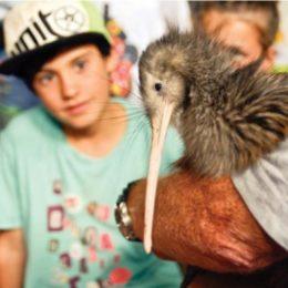 Safe passage for coastal kiwi