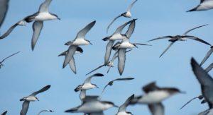 Tutukaka Pelagic Seabird Trip