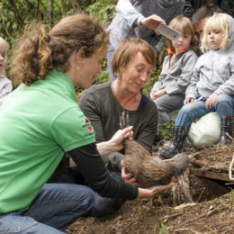 Three New Kiwi Females Released